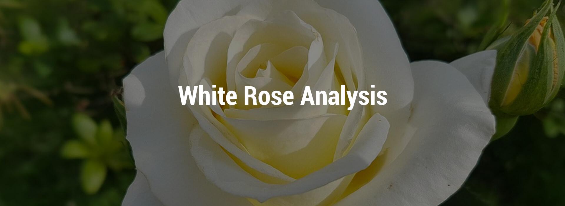 LVHS-white-rose-header