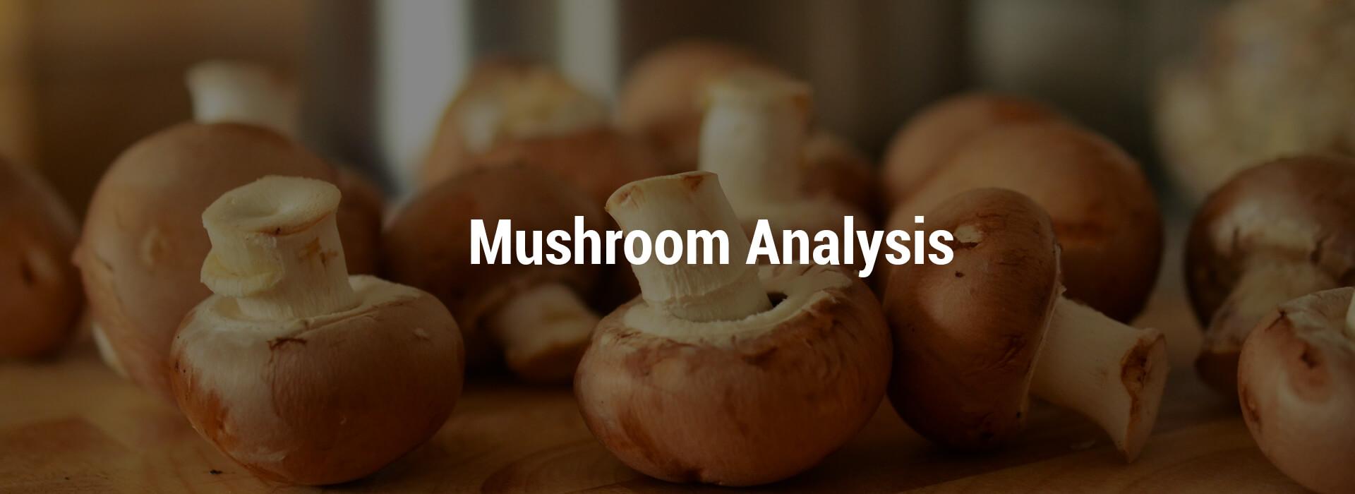 HS-mushroom-header